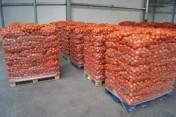 Sprzedam cebulę