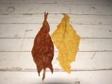Tytoń liście: Virginia, Burley, Skryniowski !!!