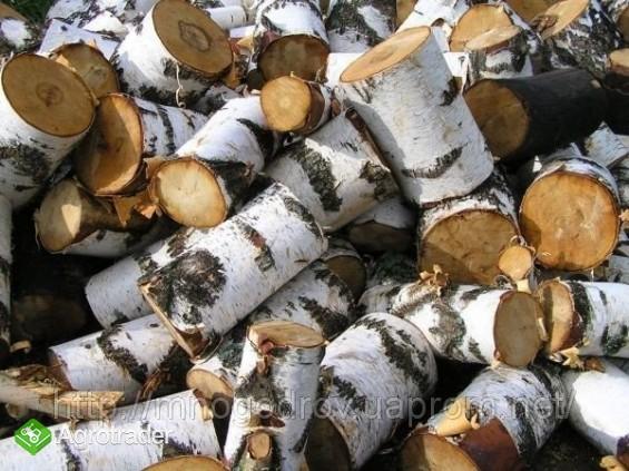 Ukraina.Drewno z Lasow Panstwowych.Cena 15 zl/m3 - zdjęcie 1