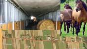 Sprzedam stadnine koni