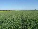 Przyjmę w dzierżawę / wydzierżawi grunty / ziemię