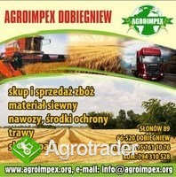 Firma AGROIMPEX kupi każdą ilość zboża