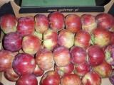 Sprzedam jabłko  odmiany Cortland +70