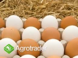 Jajka Wiejskie - zdjęcie 3