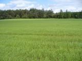 Ziemia orna 115 hektarów , uprawiane