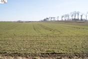 Gospodarstwo rolne, ziemia orna , uprawiane 54 h