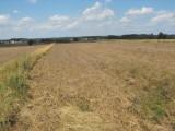 Grunt Orny 150 ha Radwanów
