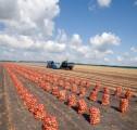 Ukraina.Warzywa,ziemniaki 0,25 zl/kg,grunty rolne.Oferujemy