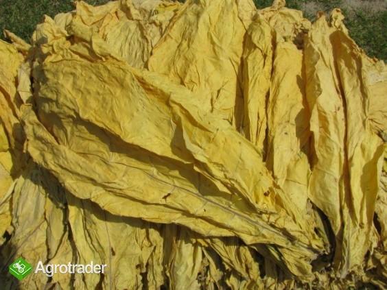 liście tytoniu do palenia