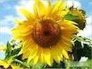 Ukraina.Torf ogrodniczy Sapropel 30 zl/tona rozdrobniony,kompostowany