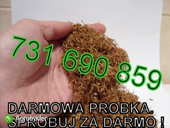 Tytoń uczciwa oferta. Wysoka jakość. DARMOWE PRÓBKI SPRAWDŹ - zdjęcie 1