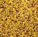 Koniczyna czerwona, nasiona, zbiór 2017, czyczyszczone na Petkusie