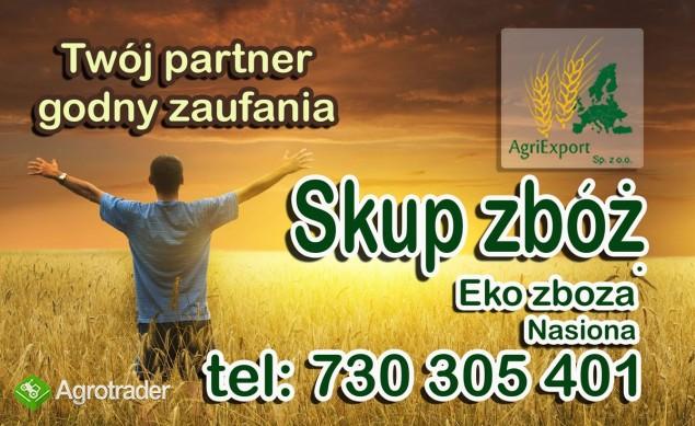 Skup zbóż paszowych oraz konsumpcyjnych, kontraktacje