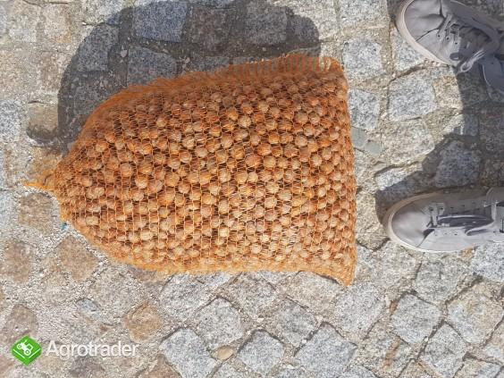 Orzechy laskowe w skorupie Halle  - zdjęcie 1