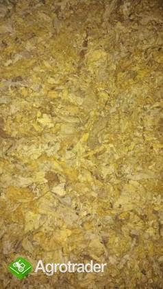 Liscie tytoniu . cale strips blend scraps dowoz - zdjęcie 3