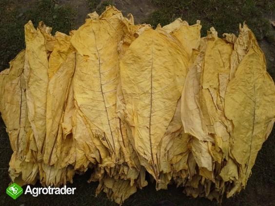 Liście tytoniu Virginia листья табака