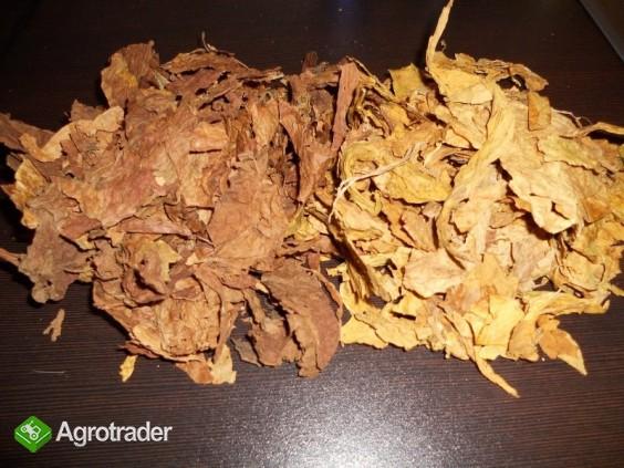 Liscie tytoniu. Wysyłka. Dowóz - zdjęcie 1
