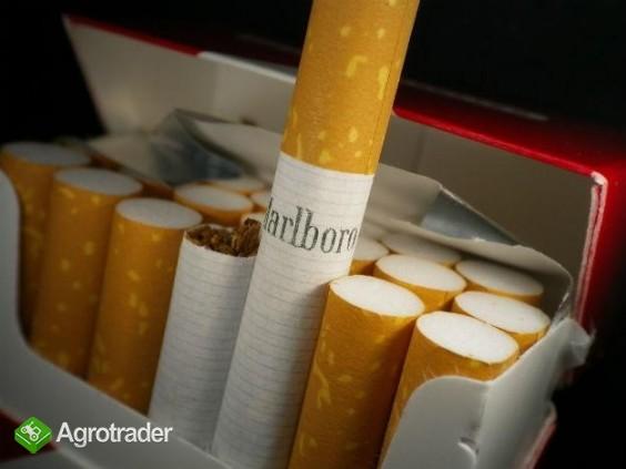 Super tytoń wszystkie rodzaje ld,marlboro,korsarz ondraszek