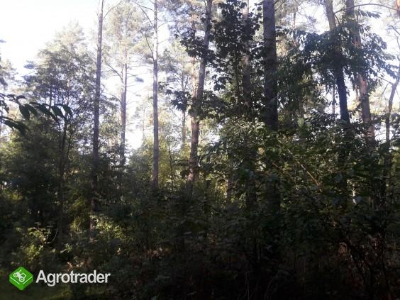 Sprzedam zadbany las z gruntem- 5 ha z dofinansowaniem z Unii do 2027r - zdjęcie 3
