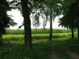 Sprzedam Gospodarstwo Rolne 14,5 ha koło Iłży
