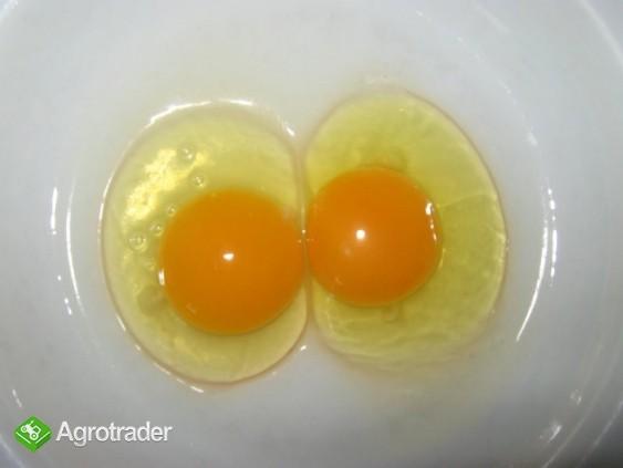 Sprzedam jajka wiejskie numer wet.1PL - zdjęcie 3