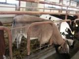 Sprzedam cielata byczki,jałówki