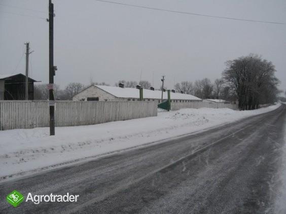 Ukraina.Gospodarstwo rolne,ferma trzody chlewnej