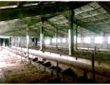 Ukraina.Gospodarstwo rolne+duze arealy ziemi.Tanio