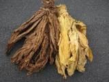 liście tytoniu barley i virginia