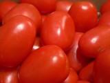 Pomidory polne